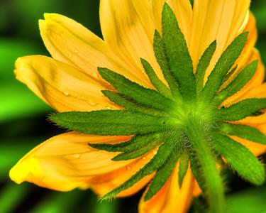 Flower 6508