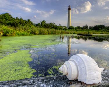 Lighthouse Shell 8375