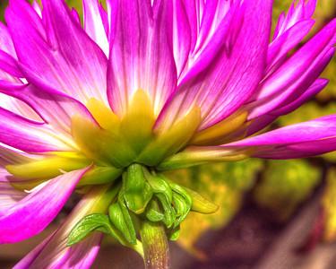 Flower 7062